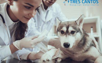 Primeros auxilios para perros. Cuidados básicos para tu mascota