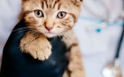 Primeros auxilios para gatos: cómo actuar ante accidentes y emergencias