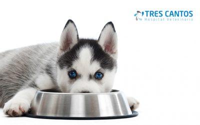 Intoxicaciones alimentarias en perros: síntomas y alimentos prohibidos