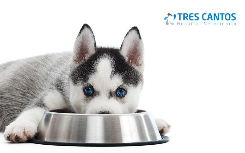 Perro comiendo pienso alimentos no perjudiciales