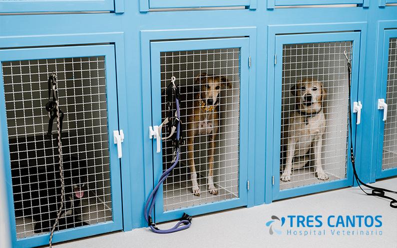 Displasia de cadera en perros: síntomas, prevención y tratamiento