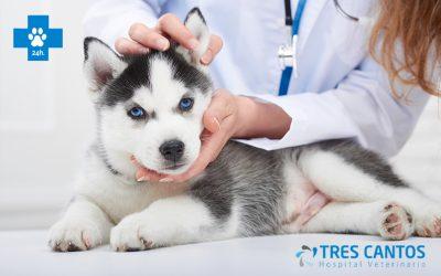 Urgencias veterinarias en Madrid, HV Tres Cantos, centro de referencia 24 horas