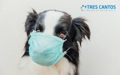 Conoce el Coronavirus canino, sus síntomas y tratamiento