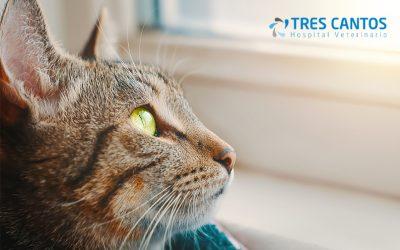 Enfermedad renal crónica felina: diagnóstico y tratamiento