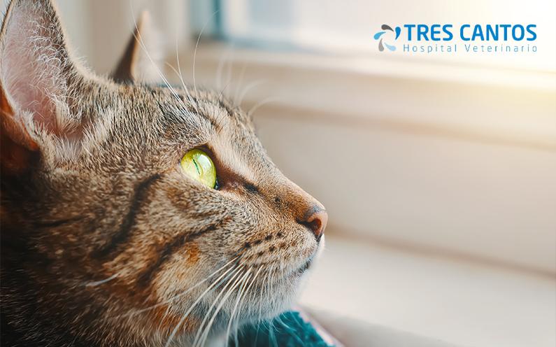 enfermedad renal cronica felina