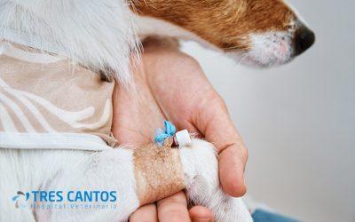 Uso de fluidoterapia en veterinaria