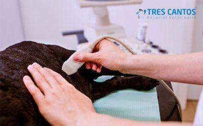 TFast: conoce más sobre esta técnica de diagnóstico veterinaria