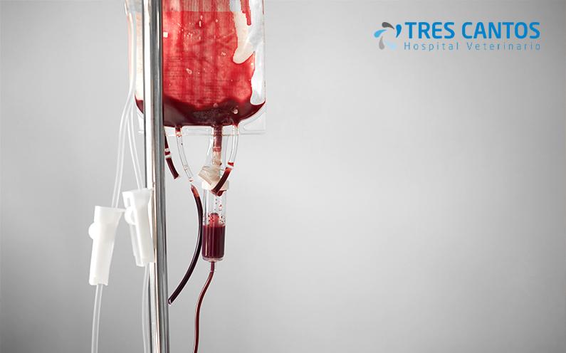 transfusiones de sangre veterinarios
